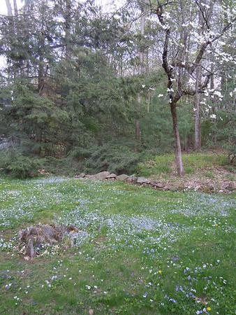 Avon CT wildflowers
